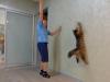Winston Onix Gloria jumping