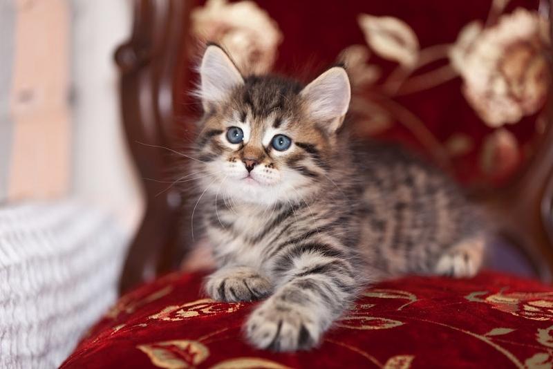 6 month old cat behaviour